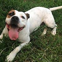 Adopt A Pet :: Frankie- Courtesy Listing - Fredericksburg, VA