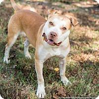 Adopt A Pet :: Forest - Athens, GA