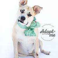Adopt A Pet :: Fiona - Marietta, GA