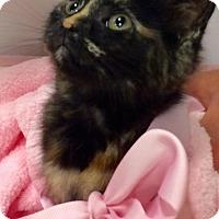 Adopt A Pet :: Juni - Greensburg, PA