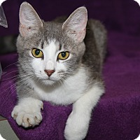 Adopt A Pet :: Eleanor (Combo Tested)-New - Marietta, OH
