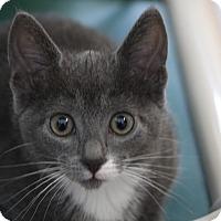 Adopt A Pet :: Jiggle - Sarasota, FL