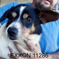 Adopt A Pet :: Exxon - Manassas, VA