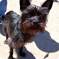 Adopt A Pet :: Breeze - Seal Beach, CA