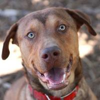 Adopt A Pet :: PETER - Kyle, TX