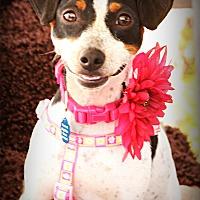 Adopt A Pet :: Daffy - Omaha, NE
