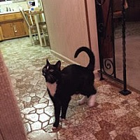 Adopt A Pet :: Holly Easy - Norwalk, CT