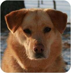 Husky/Labrador Retriever Mix Dog for adoption in Barron, Wisconsin - Darcy