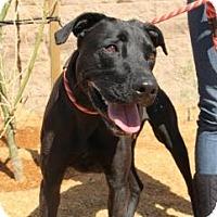 Adopt A Pet :: Sonic - Canoga Park, CA