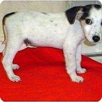 Adopt A Pet :: Patrick - Westbrook, CT