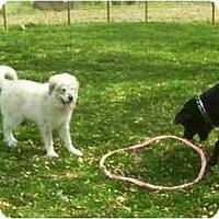 Adopt A Pet :: Kona - Chandler, IN