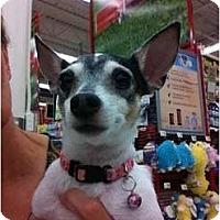 Adopt A Pet :: Petie - Ooltewah, TN