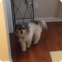 Adopt A Pet :: Gizzy - Bristol, TN