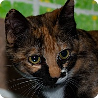 Adopt A Pet :: Ariel - Walla Walla, WA