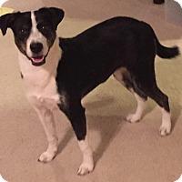 Adopt A Pet :: Emmie - Orlando, FL
