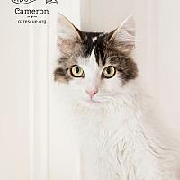 Adopt A Pet :: Cameron - Phoenix, AZ