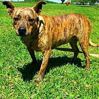Adopt A Pet :: Ty - Brewster, NY