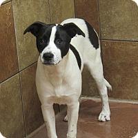 Adopt A Pet :: Blossom *Petsmart GB* - Appleton, WI