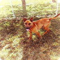 Adopt A Pet :: Scuttle - Van Wert, OH