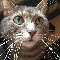 Adopt A Pet :: Smokie - Burlington, ON