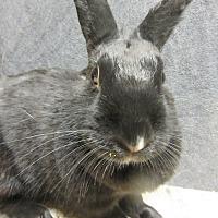 Adopt A Pet :: Mila - Newport, DE
