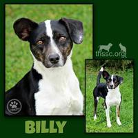 Adopt A Pet :: Billy - Sullivan, IN