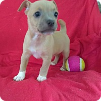 Adopt A Pet :: Tex - Lawrenceville, GA
