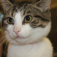 Adopt A Pet :: CJ - Clayton, NJ