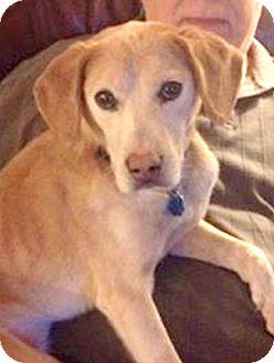 Hound (Unknown Type) Mix Dog for adoption in Cincinnati, Ohio - Talli
