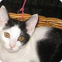 Adopt A Pet :: Pepper - Dallas, TX