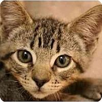 Adopt A Pet :: Cricket - Davis, CA