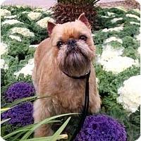 Adopt A Pet :: SERGIO - ADOPTION PENDING - Cumming, GA