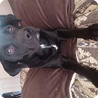 Adopt A Pet :: Murphy - Lewisville, IN