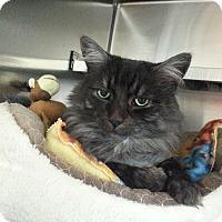 Adopt A Pet :: Harley - Chesapeake, VA