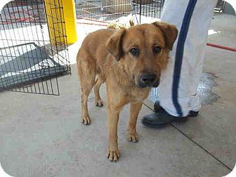 Golden Retriever Mix Dog for adoption in Newnan City, Georgia - Teddy