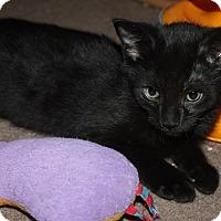 Adopt A Pet :: Wally (LE) - Little Falls, NJ