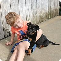 Adopt A Pet :: Boston - South Dennis, MA
