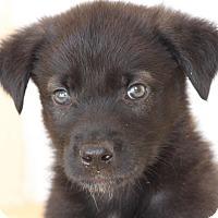 Adopt A Pet :: Zeto - Ormond Beach, FL