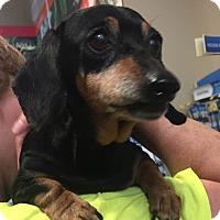 Adopt A Pet :: CJ - Warner Robins, GA