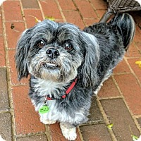 Adopt A Pet :: Coco - Potomac, MD