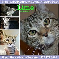 Adopt A Pet :: Lime - Hearne, TX