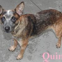 Adopt A Pet :: 9785 Quinn - Erie, PA