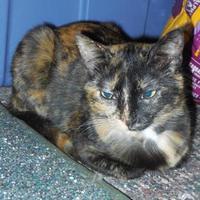 Adopt A Pet :: Reegan - Whiting, IN