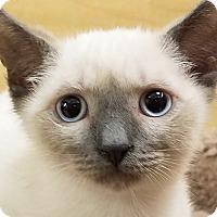 Adopt A Pet :: Kade - Irvine, CA