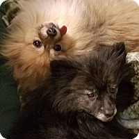 Adopt A Pet :: Boo and Cody - Stow, ME