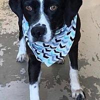 Adopt A Pet :: Sand - Gilbertsville, PA