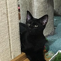 Adopt A Pet :: Channing Tater - Capshaw, AL