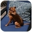 Photo 3 - Miniature Pinscher Dog for adoption in Springvale, Maine - LIBBY