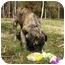Photo 3 - Shepherd (Unknown Type)/Retriever (Unknown Type) Mix Dog for adoption in Mocksville, North Carolina - Toby