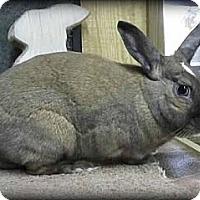 Adopt A Pet :: Nyla - Williston, FL
